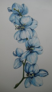#33 orchid study