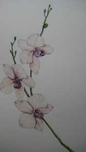 #34 orchid study