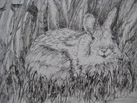 Cottontail Peeking by C.A.Centre